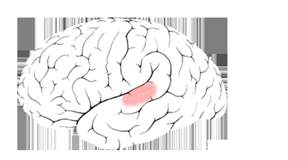 Wunderbar Gehirn Mit Markierten Teile Bilder - Menschliche Anatomie ...